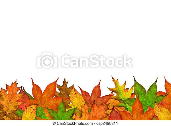 Autumn Season Leaves - csp2498311