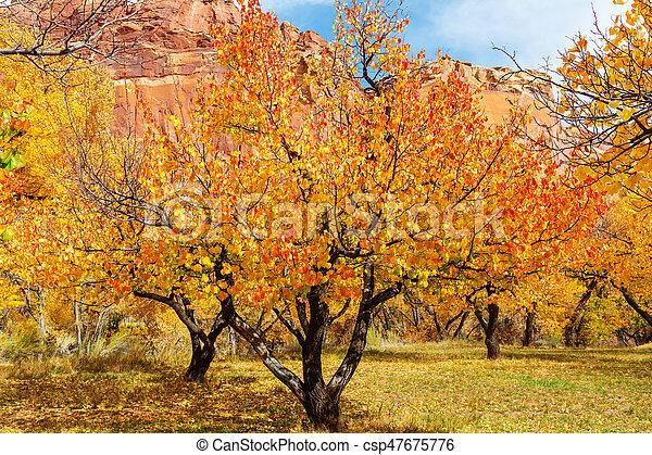 Autumn season - csp47675776