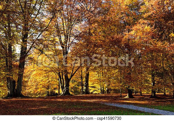 autumn season scenic in a park - csp41590730