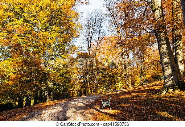 autumn season scenic in a park - csp41590736