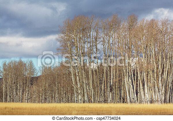 Autumn season - csp47734024
