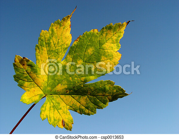 autumn sky - csp0013653