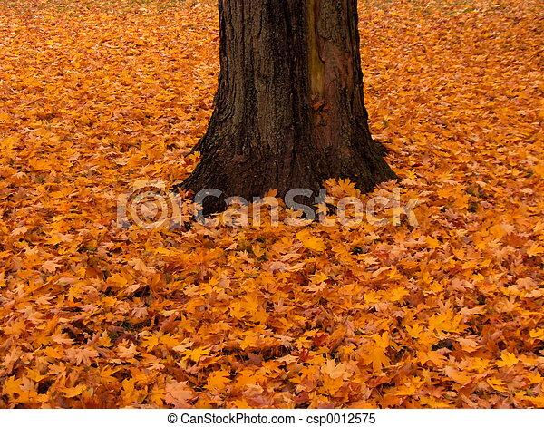 Autumn Splendor - csp0012575