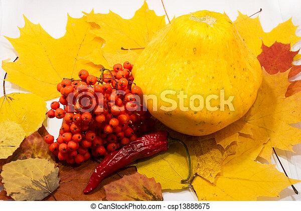 Autumn Still Life - csp13888675