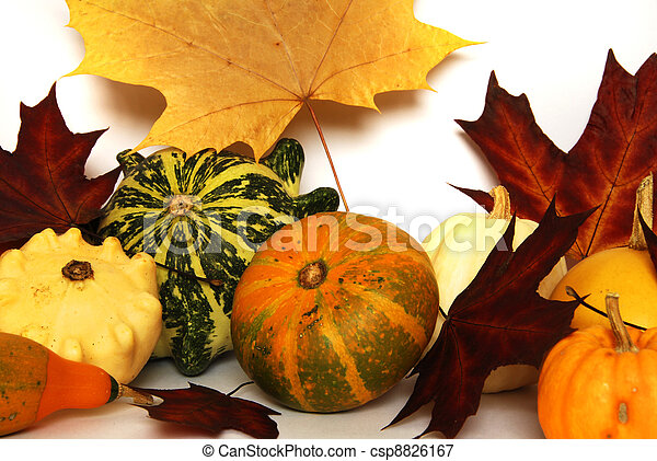 Autumn still-life - csp8826167