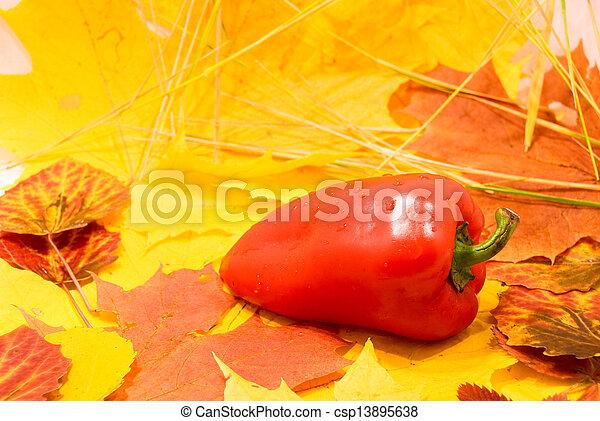 Autumn Still Life - csp13895638