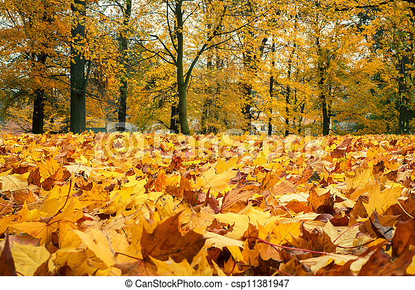 Autumn still life with yellow maple leaves - csp11381947