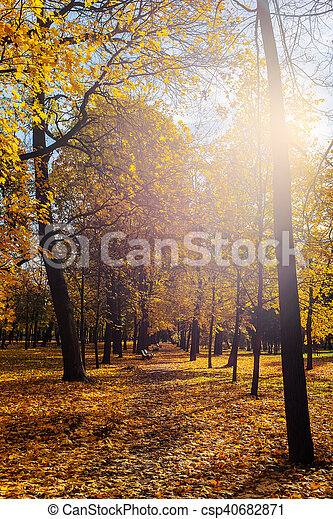 autumn sun in the park - csp40682871