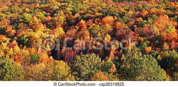 Autumn tree background - csp26319825