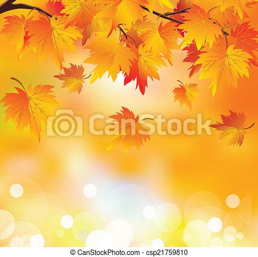 Autumn tree branch - csp21759810