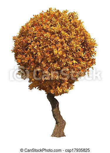 Autumn Tree Isolated on White Background. - csp17935825
