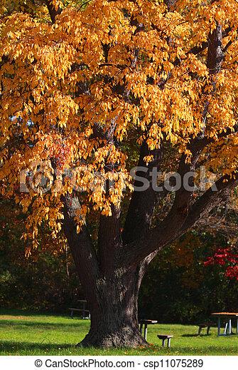 Autumn tree - csp11075289