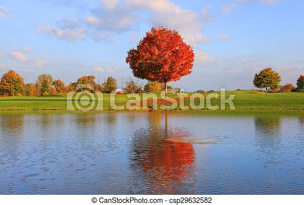 Autumn tree reflection - csp29632582