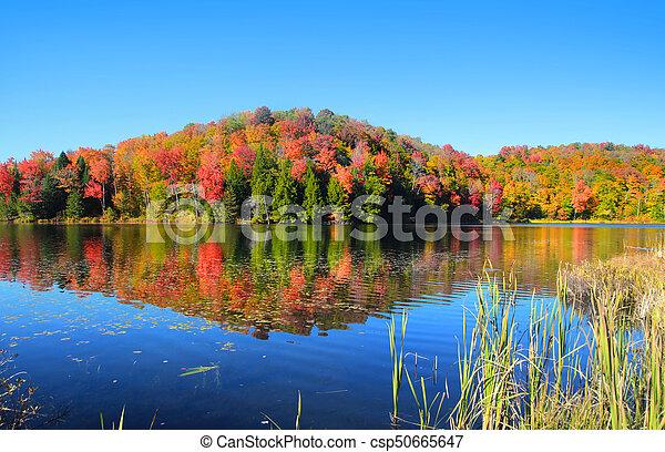 Autumn tree reflection - csp50665647