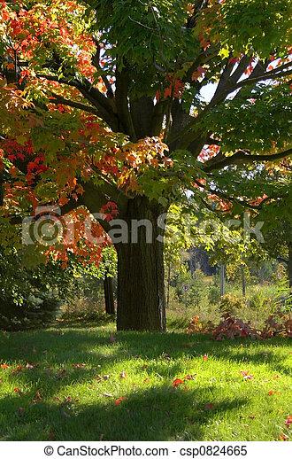 Autumn Tree - csp0824665