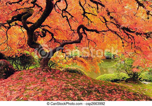 Autumn tree - csp2663992