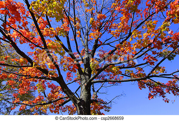 Autumn tree - csp2668659