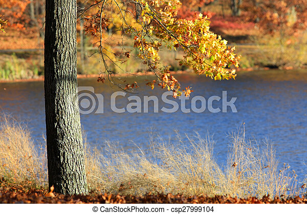 Autumn tree - csp27999104