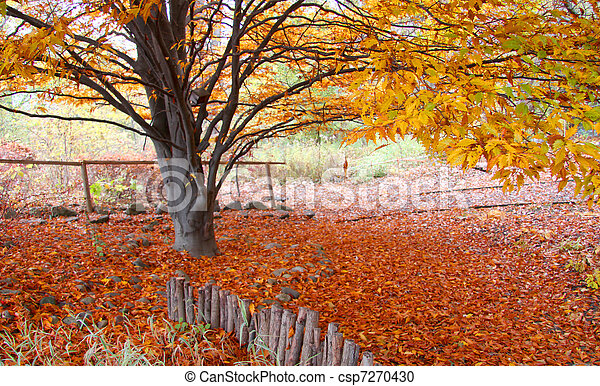 Autumn tree - csp7270430