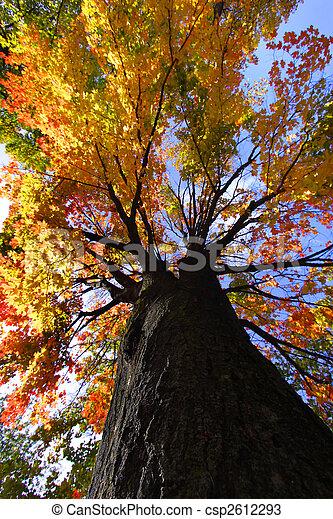 Autumn tree - csp2612293