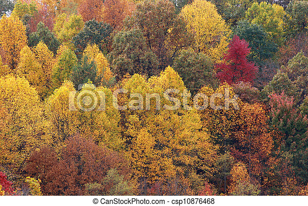 Autumn trees background - csp10876468
