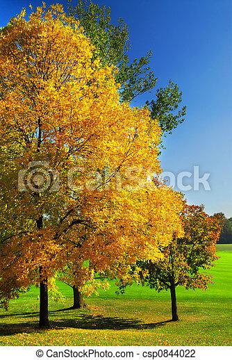 Autumn trees - csp0844022