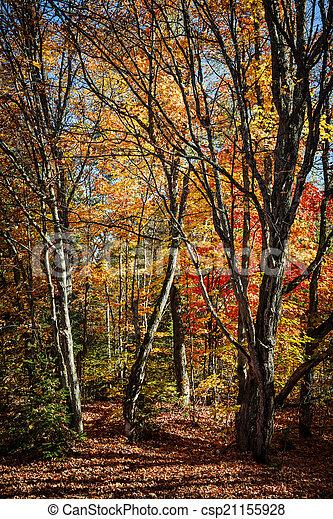 Autumn trees - csp21155928