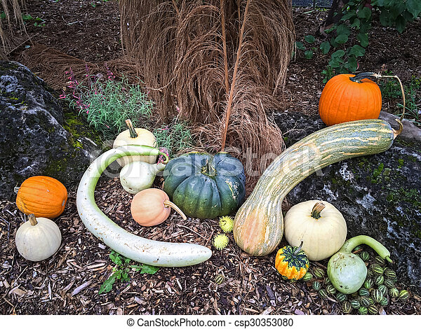 Autumn vegetables decorating a garden - csp30353080