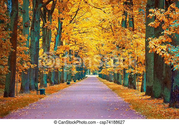 Autumn view of an oak alley with a footpath and benches. - csp74188627