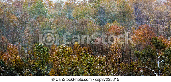Autumn View of Trees and Foliage in natural landscape - csp37235815