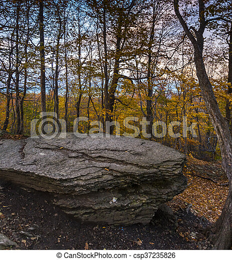Autumn View of Trees and Foliage in natural landscape - csp37235826