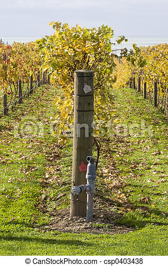 Autumn Vines 05 - csp0403438