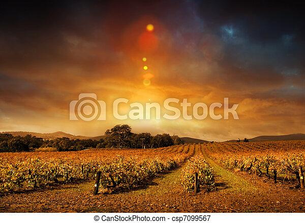 Autumn Vineyard Sunset - csp7099567