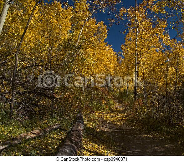 Autumn Walk - csp0940371