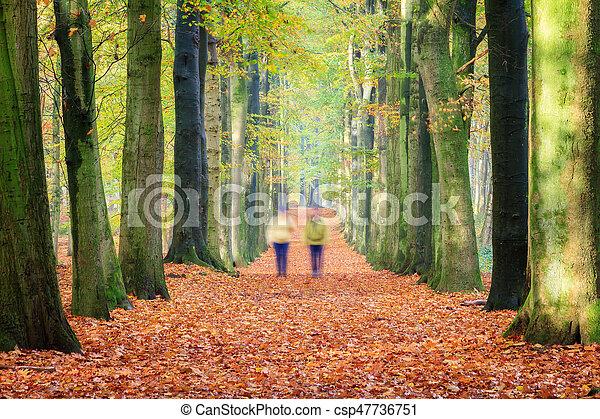 Autumn walk - csp47736751