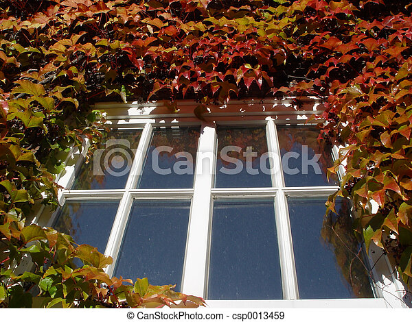 autumn window - csp0013459