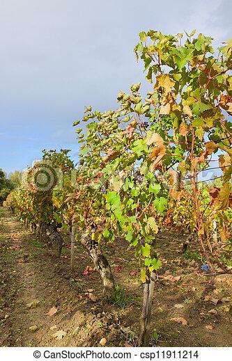 autumn winery garden - csp11911214