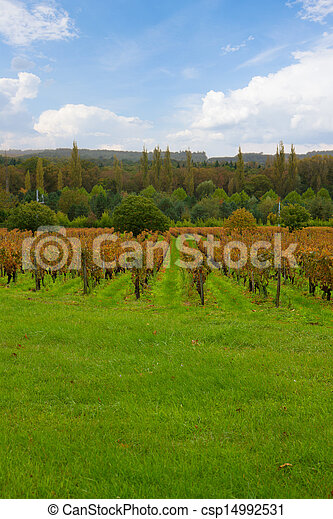 autumn winery rows - csp14992531