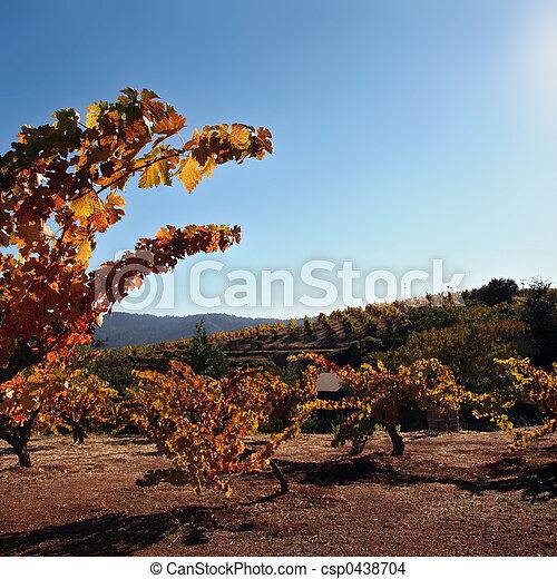 Autumn winery - csp0438704