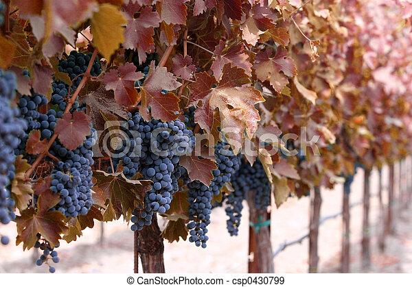 Autumn winery - csp0430799