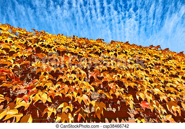 autumn with red leaves - csp38466742
