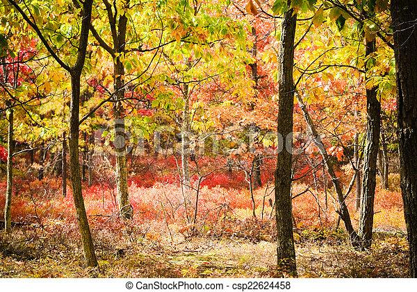 Autumn Wood - csp22624458