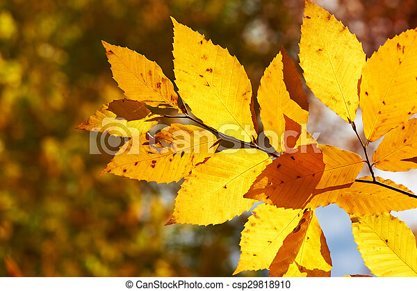 Autumn yellow leaves background - csp29818910