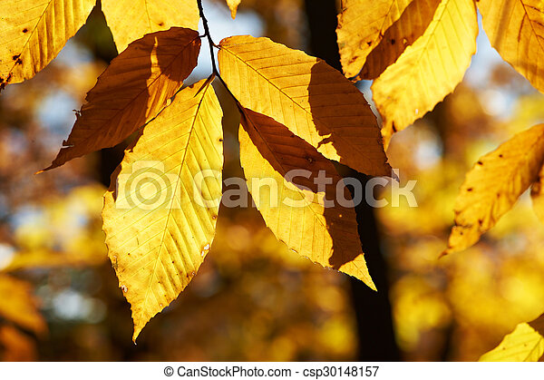 Autumn yellow leaves background - csp30148157