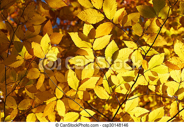 Autumn yellow leaves background - csp30148146