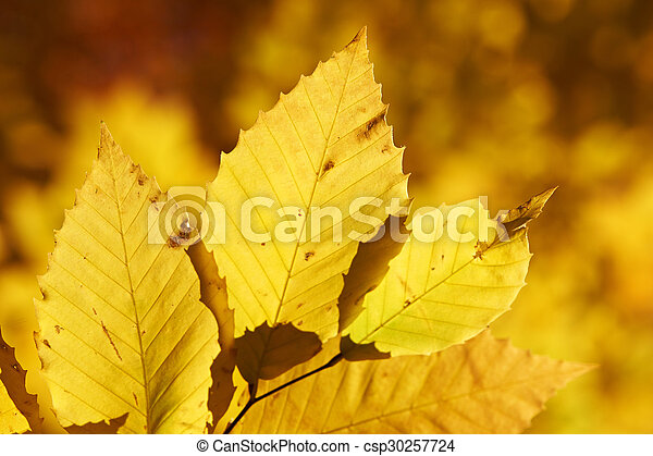 Autumn yellow leaves background - csp30257724
