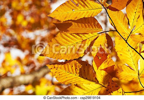 Autumn yellow leaves background - csp29819104
