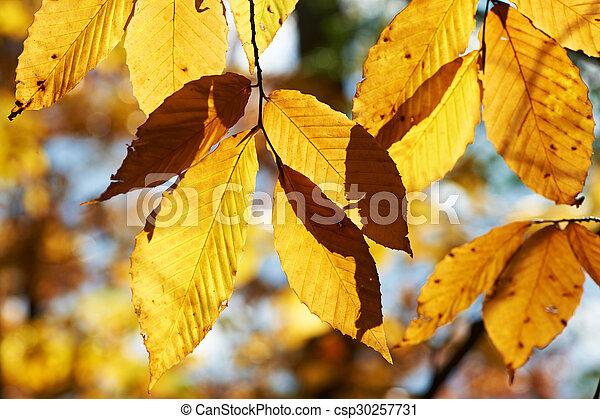 Autumn yellow leaves background - csp30257731