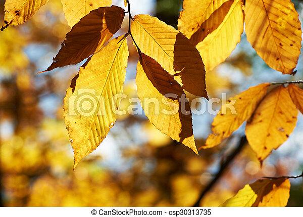 Autumn yellow leaves background - csp30313735