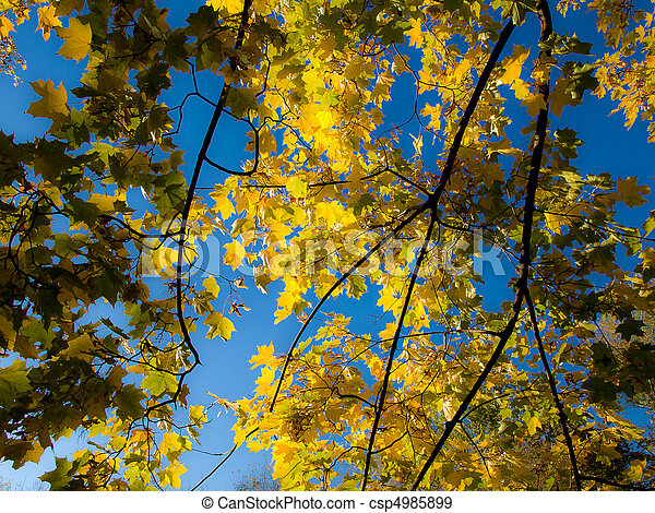 Autumn yellow leaves on blue sky background - csp4985899